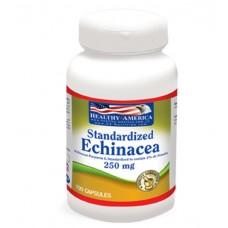 Echinacea Purpurea 250MG x 100 Capsules